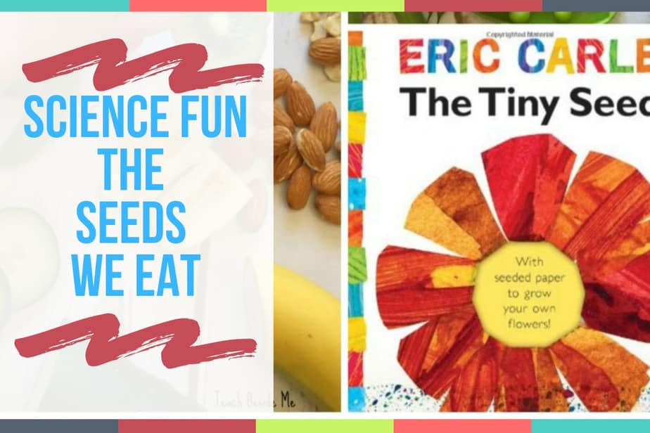 SCIENCE FUN - THE SEEDS WE EAT
