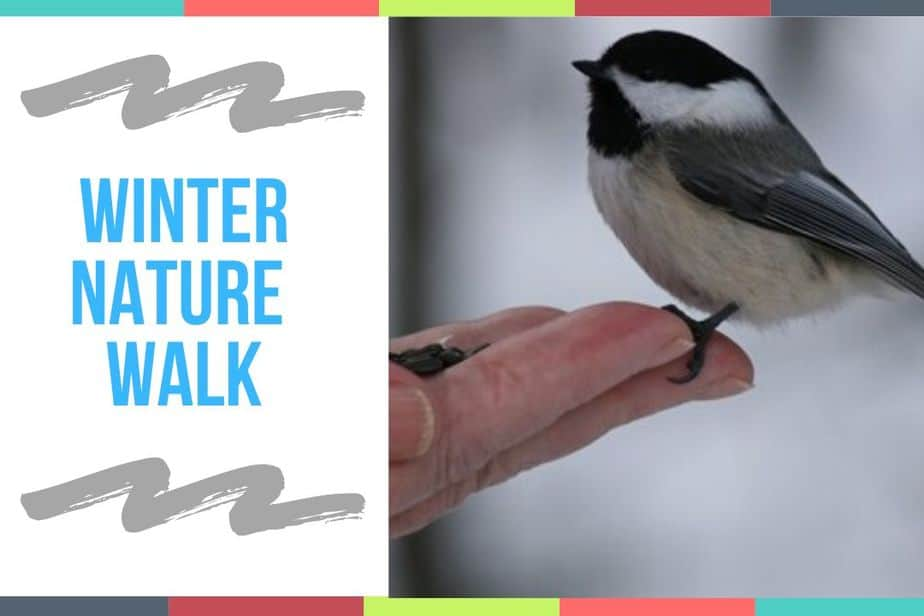 Winter Nature Walk