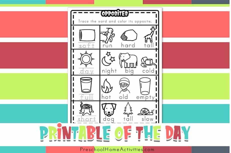featured Preschool Opposite Worksheets
